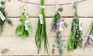 De maio de grama, ou seja, os dons da natureza, que vale a pena incluir na dieta