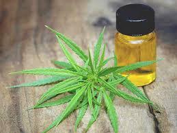 Cannabis oil - limpeza do corpo - criticas - preço - como usar